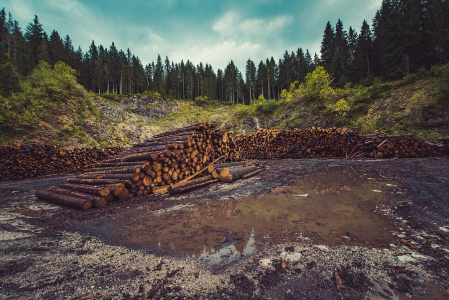 pila, madera, troncos, tronco, maderera, deforestacion, naturaleza,