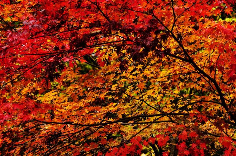 Imagen de atardecer fondo background oto o hoja hojas - Descargar autumn leaves ...
