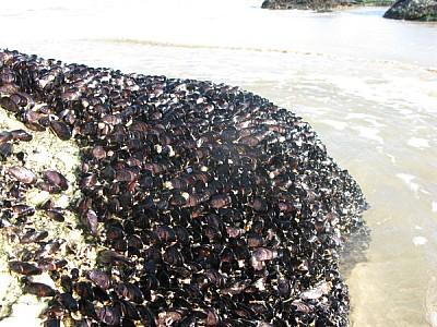 playa,costa,vista de frente,ostra,ostras,almeja,al
