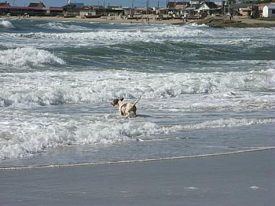 imágenes gratis playa,arena,verano,dia,aire libre,exterior,perro,p