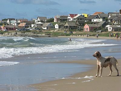 playa,arena,verano,dia,aire libre,exterior,perro,p