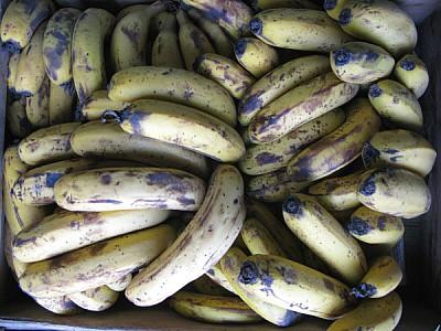 imágenes gratis fruta,frutas,banana,bananas,vista de frente,verde,