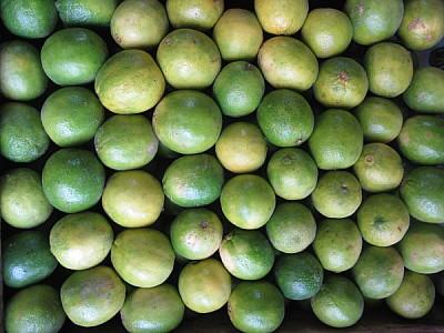 fruta,frutas,limon,limones,vista de frente,verde,v