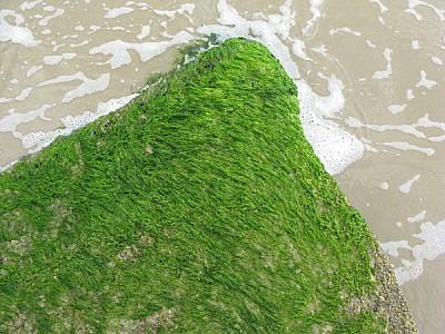 imágenes gratis playa,verano,arena,agua,vista de arriba,pasto,cesp