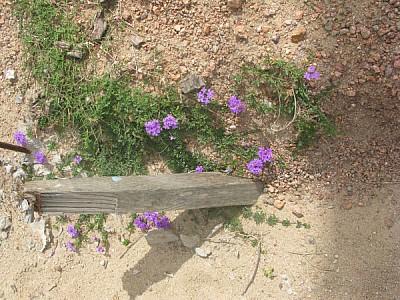 imágenes gratis tierra,flor,flores,color,colores,naturaleza,vista