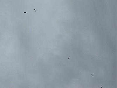 cielo,nube,nubes,nublado,mal tiempo,pajaro,pajaros