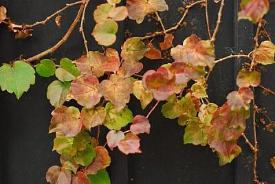 imágenes gratis fondo,background,hoja,hojas,naturaleza,otoño,vista