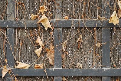 imágenes gratis otoño,hoja,hojas,vista de frente,enredadera,seco,s