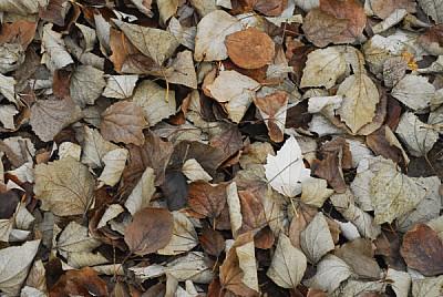 imágenes gratis hoja,hojas,otoño,vista de arriba,seco,secas,fondo,