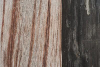 imágenes gratis fondo,background,madera,arbol,vista de frente,tron