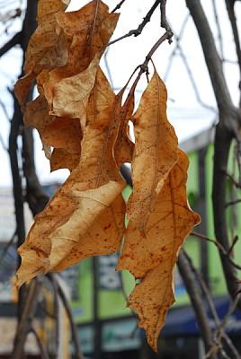 imágenes gratis hoja,hojas,planta,plantas,vista de frente,fondo,ba