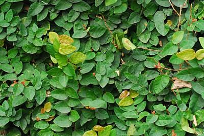 imágenes gratis hoja,hojas,verde,planta,plantas,vista de frente,fo