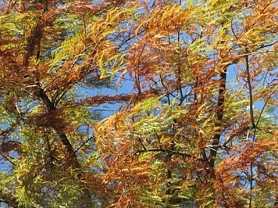 imágenes gratis arbol,arboles,naturaleza,vista de abajo,color,colo
