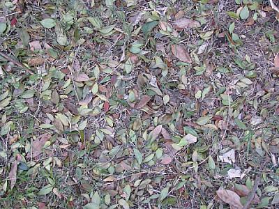 imágenes gratis hojas,hoja,vista de arriba,seco,secas,jardin,fondo