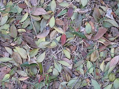 imágenes gratis hojas en el piso