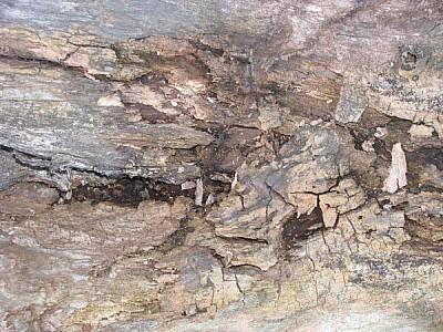 imágenes gratis madera,vista de frente,arbol,corteza,primer plano,
