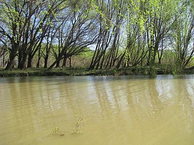 imágenes gratis rio,rios,vista de frente,agua,aire libre,dia,exter