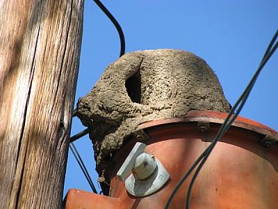 imágenes gratis nido,hornero,vista de abajo,aire libre,dia,exterio