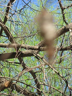 imágenes gratis naturaleza,arbol,arboles,rama,ramas,vista de frent