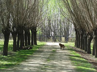 escena rural,campo,vista de frente,tranquera,entra