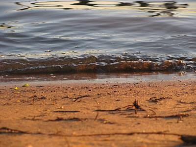imágenes gratis vista de frente,agua,costa,playa,arena,primer plan