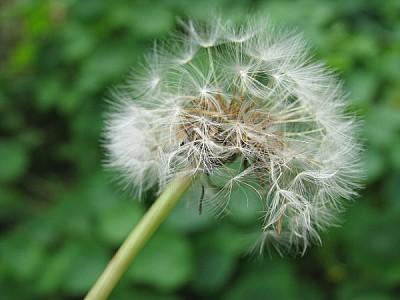 imágenes gratis flor,flores,naturaleza,vista de frente,color,deseo
