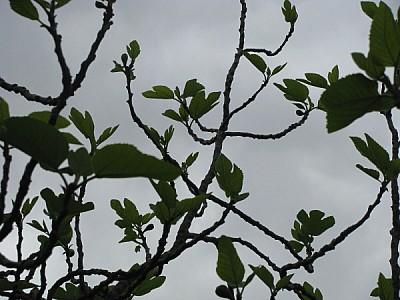 arbol,vista de abajo,cielo,nublado,gris,oscuro,inv