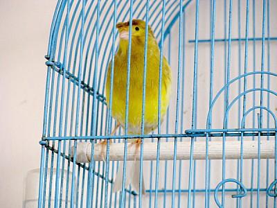 imágenes gratis Adulto,Adultos,Animal,Animal domestico,Animales,An
