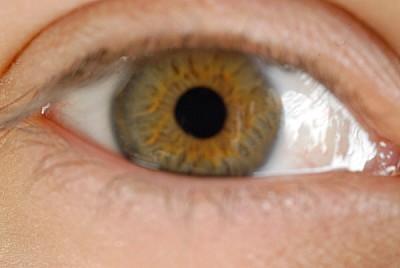 imágenes gratis ojo,primer plano,vista de frente,mirando a camara,