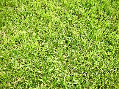 imágenes gratis prod03,pasto,cesped,fondo,background,verde,jardin,