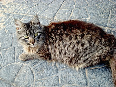 prod03,gato,gatos,animal,animales,mascota,mascotas