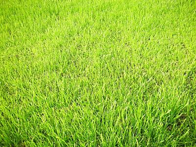 prod03,pasto,verde,cesped,fondo,background,verde,n