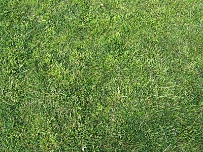 Textura Fondo Pasto Verde