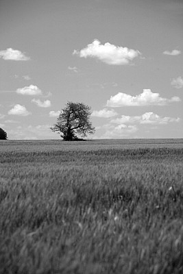 imágenes gratis prod04,campo,argentina,vista de frente,arbol,pasto