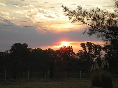 imágenes gratis prod04,argentina,campo,escena rural,atardecer,ocas
