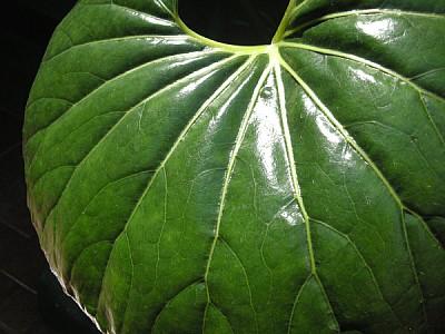 prod04,hoja,naturaleza,planta,verde,primer plano,v