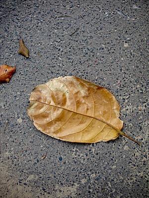imágenes gratis prod04,hoja,calle,otoño,asfalto,vereda,vista de ar