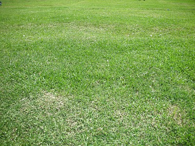 imágenes gratis prod04,pasto,cesped,verde,fondo,background,primer
