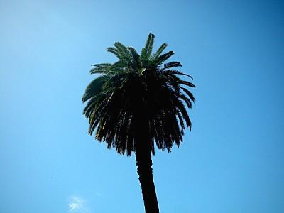 imágenes gratis prod04,palmera,vista de abajo,arbol,cielo azul,nat