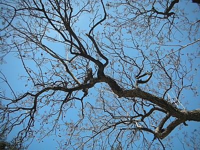 imágenes gratis prod04,arbol,rama,vista de abajo,cielo azul,fondo,
