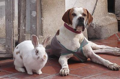 imágenes gratis Amistad animal