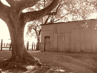 imágenes gratis argentina,corrientes,paisaje,campo,escena rural,ga
