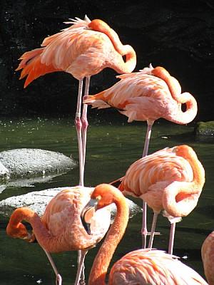 imágenes gratis Animal,Animales,Ave,Aviar,Cabeza Cabezas,Color,Cue