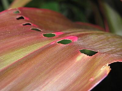 imágenes gratis planta,naturaleza,vista de frente,hormiga,hormigas