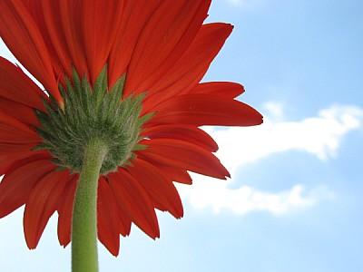 flor,naturaleza,primavera,color,colores,colorido,v