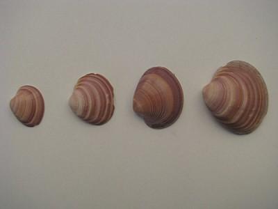caracol,caracoles,concepto,fila,linea,alineados,or