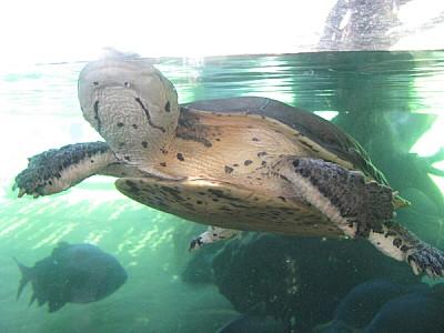 imágenes gratis animal,reptil,tortuga,garra,garras,uña,uñas,vista