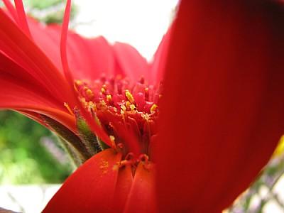 imágenes gratis flor,naturaleza,primavera,color,colores,colorido,v