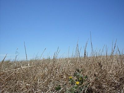 imágenes gratis argentina,buenos aires,campo,escena rural,dia,exte