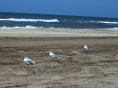 imágenes gratis argentina,costa atlantica,playa,dia,aire libre,ext